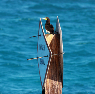 Suulat ja Merimetsot (Boobies, Gannets and Cormorants)