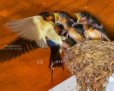Feeding Time at Oshkosh