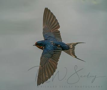 Swallow Sweep
