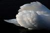 Swan Ballet #36<br /> <br /> Still displaying.