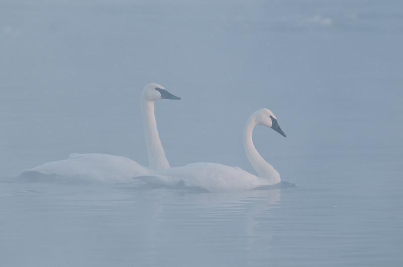 ATS-11048: Foggy morning swim