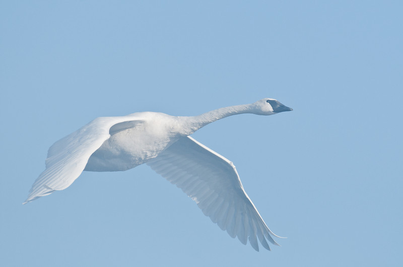 ATS-11122: Solo flight