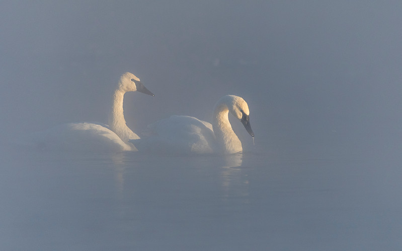 Trumpeters in river smoke