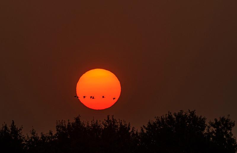 Geese flying through sunrise