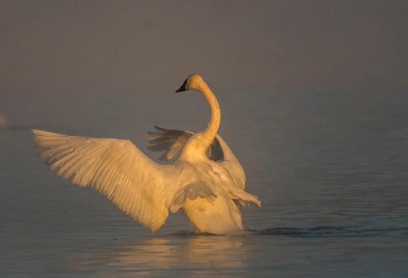 Sunrise wing stretch