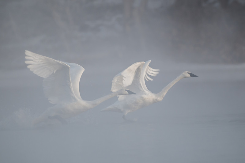 ATS-13-56: Foggy morning flight