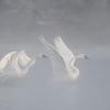 ATS-13-50: Taking flight into the fog