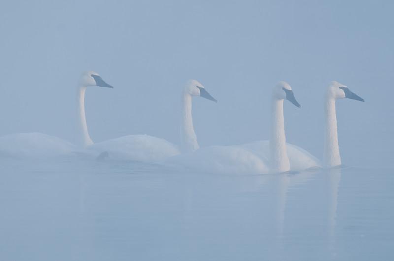 ATS-11052: Misty morning gathering