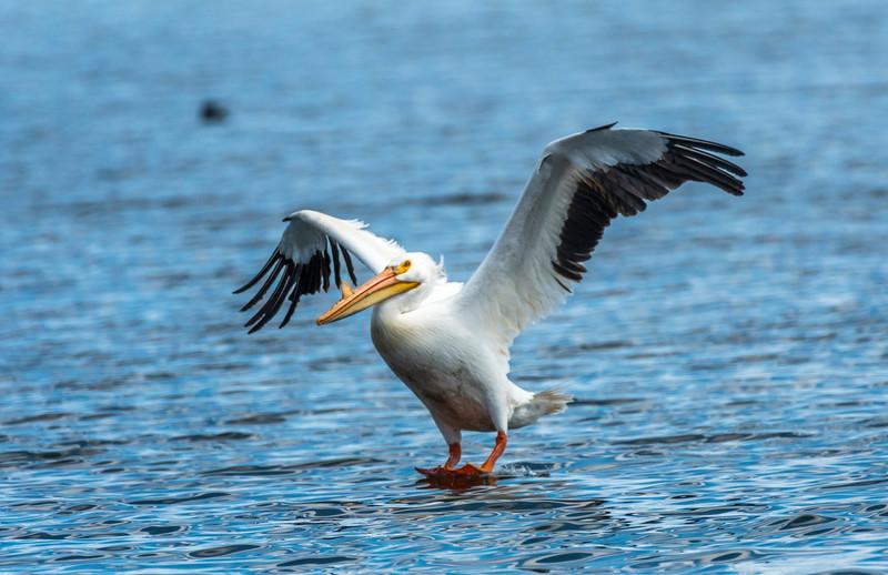 Pelican soft landing