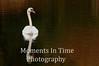 Swan mute