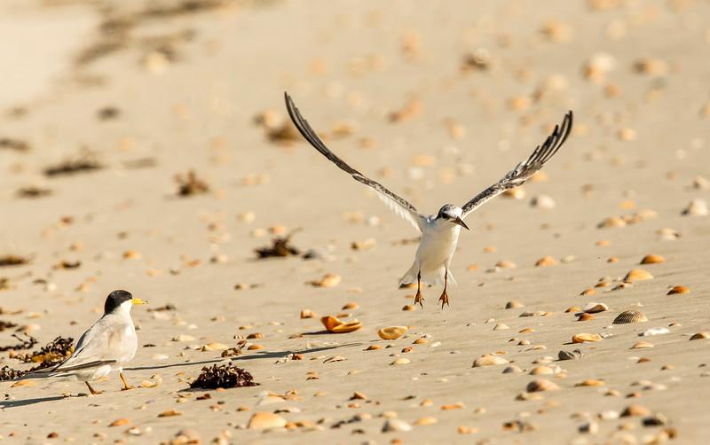 Juvenile Taking Flight