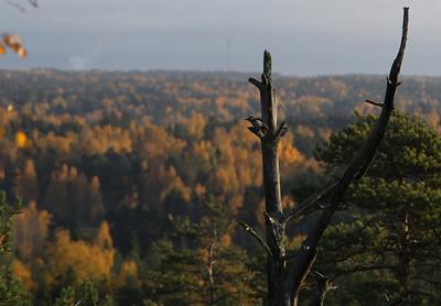 11.10.2013 Helsinki, Finland