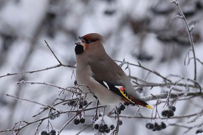 24.1.2010, Vantaa Tikkurila, Finland