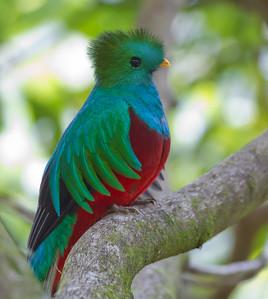 Costa Rica Photos; Savegre Valley