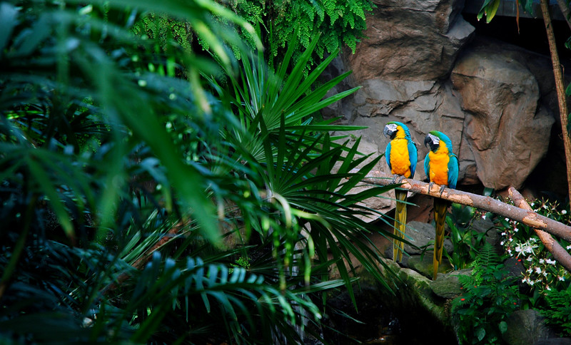 Blue and gold macaws<br /> Professional Wildlife Photography by Christina Craft of the Nature Stock Photography Library