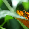 butterfly closeup macro orange - Nature Stock Image by Professional Nature Photographer Christina Craft