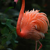 flamingo - Nature Stock Image by Professional Nature Photographer Christina Craft