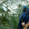 Macaw<br /> <br /> Professional Wildlife Photography by Christina Craft of the Nature Stock Photography Library