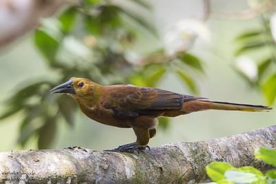 - Amazon, Ecuador