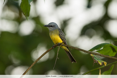 - Mindo, Ecuador