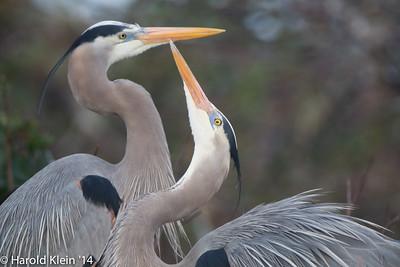 Beautiful birds, elegant displays…very entertaining...