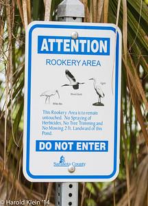 Venice Rookery, Venice, FL, Jan2014-48