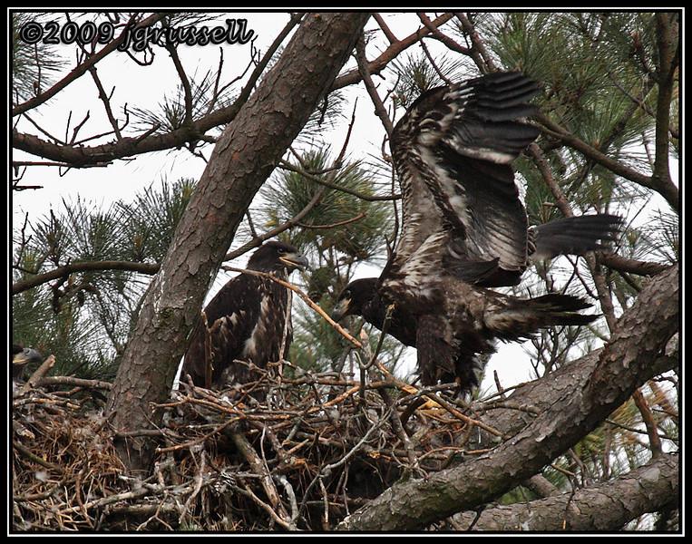 Eaglets<br /> Norfolk Botanical Garden