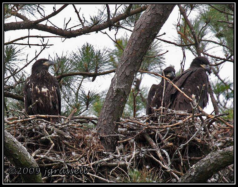 Eaglets<br /> Norfolk Botanical Garden