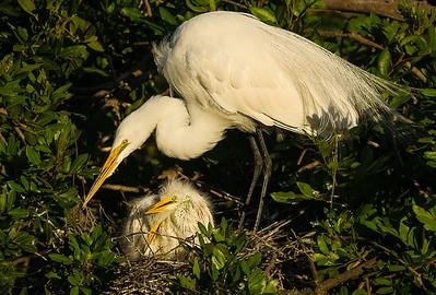 nest activity