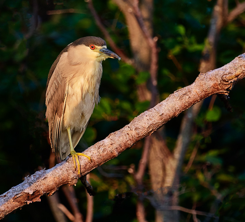 Adult in roost