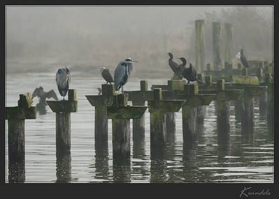 Cormorants, Herons and friends