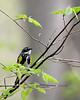 Yellow-rumped Warbler @ Clear Creek Metro Park - April 2008