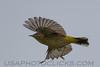 Palm Warbler (b2822)
