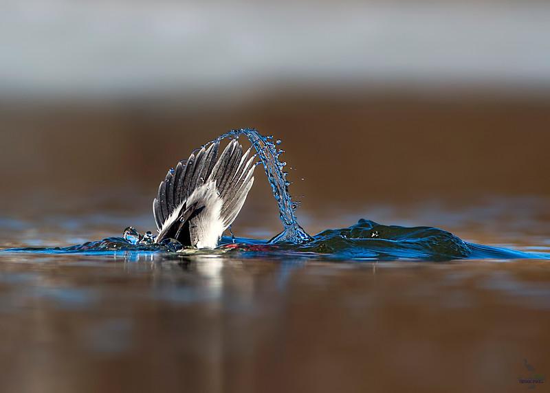 Fountain  flip