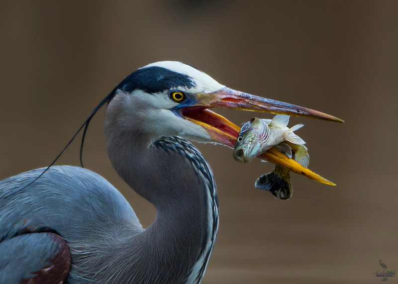 GBH catch of the day