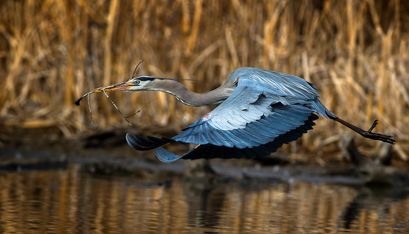 GBH with nesting material