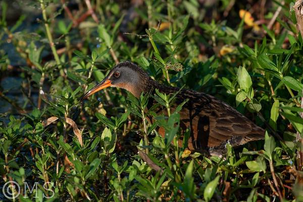 Waterbird Image Gallery
