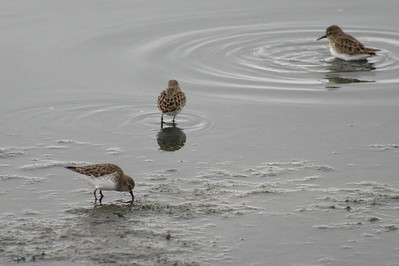 Waterfowl Bonanza 2