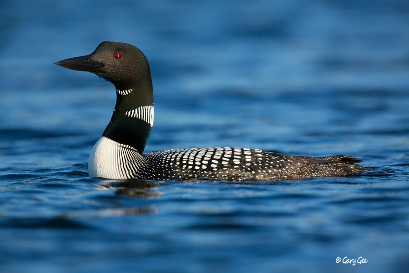 Loons-3-10