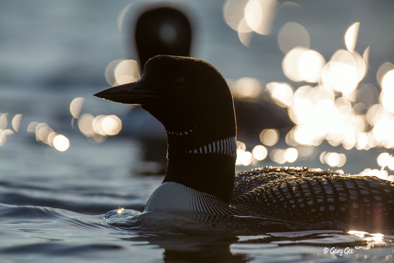 Loons-3-6