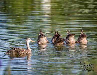 OK Class: Downward Duck!!