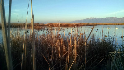 Waterfowl hunting in Utah