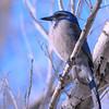 bird 1484