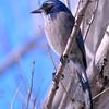 bird 1488