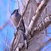 bird 1489
