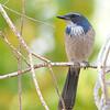 bird 888