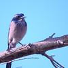 bird 1491