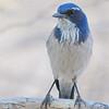 bird 886