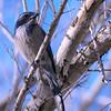 bird 1483