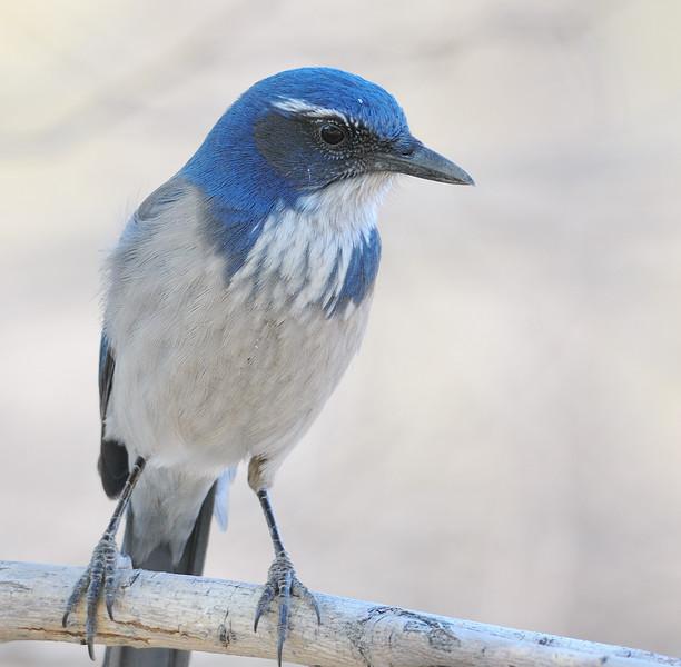 bird 885